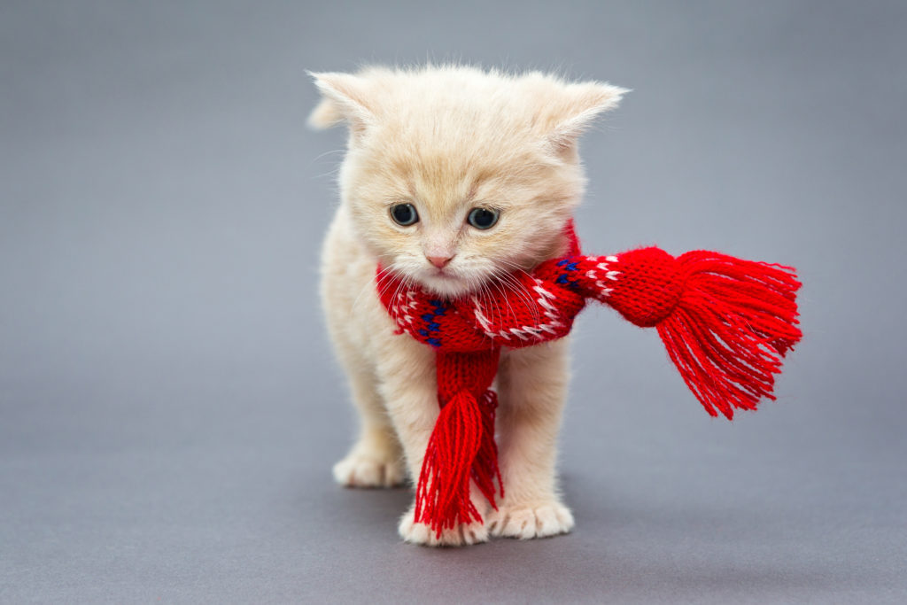 Pet fashion products for dropship